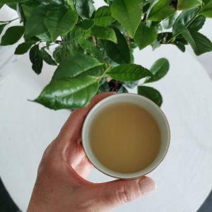Magyar tea